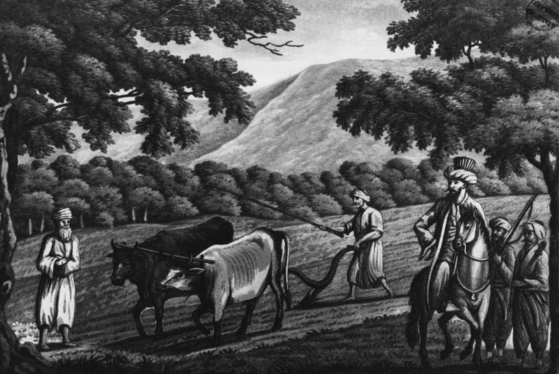 Oxen plough blog