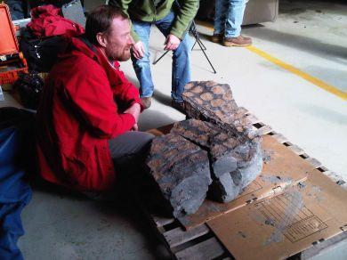 Fossile d'ankylosaure découvert