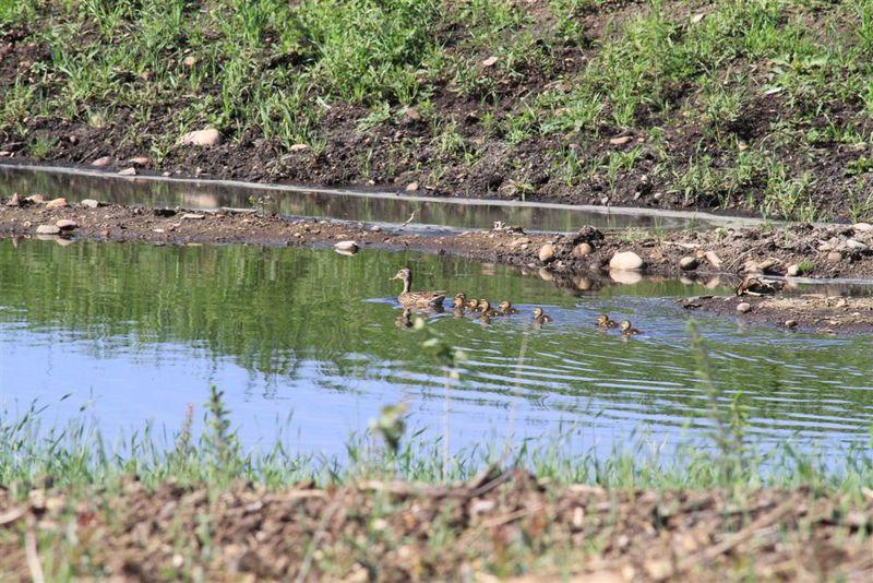 Wapisiw Wetlands 2